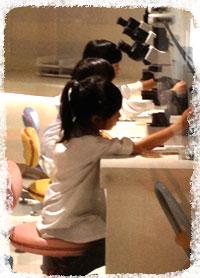 菌研究者。赤痢菌を顕微鏡でのぞいてます。この後、ヤクルトを飲みながら会議(笑)